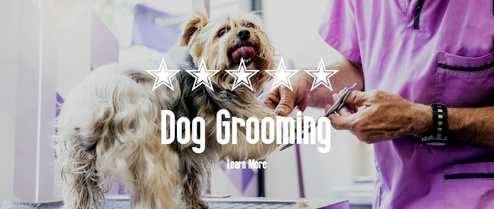 Dog Grooming Dog Groomers