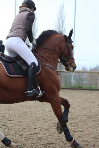 kunststoffbeschlag, pferd, reitsport, springen