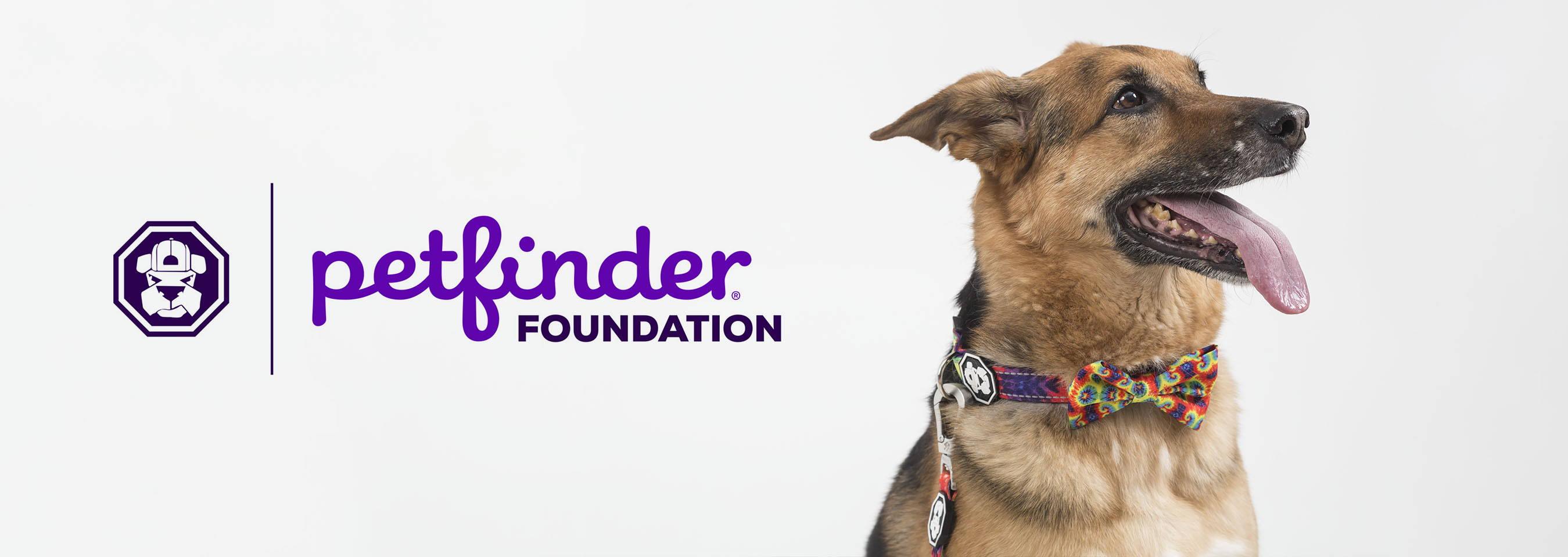 fresh pawz pet finder non profit