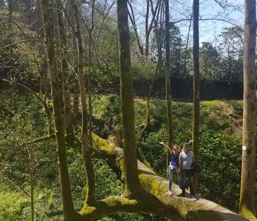 Ботанический сад Батуми и Город-крепость Петра