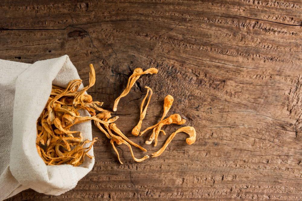 Cordyceps mushroom on wooden table