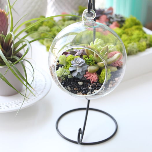 Подвесной флорариум с суккулентами