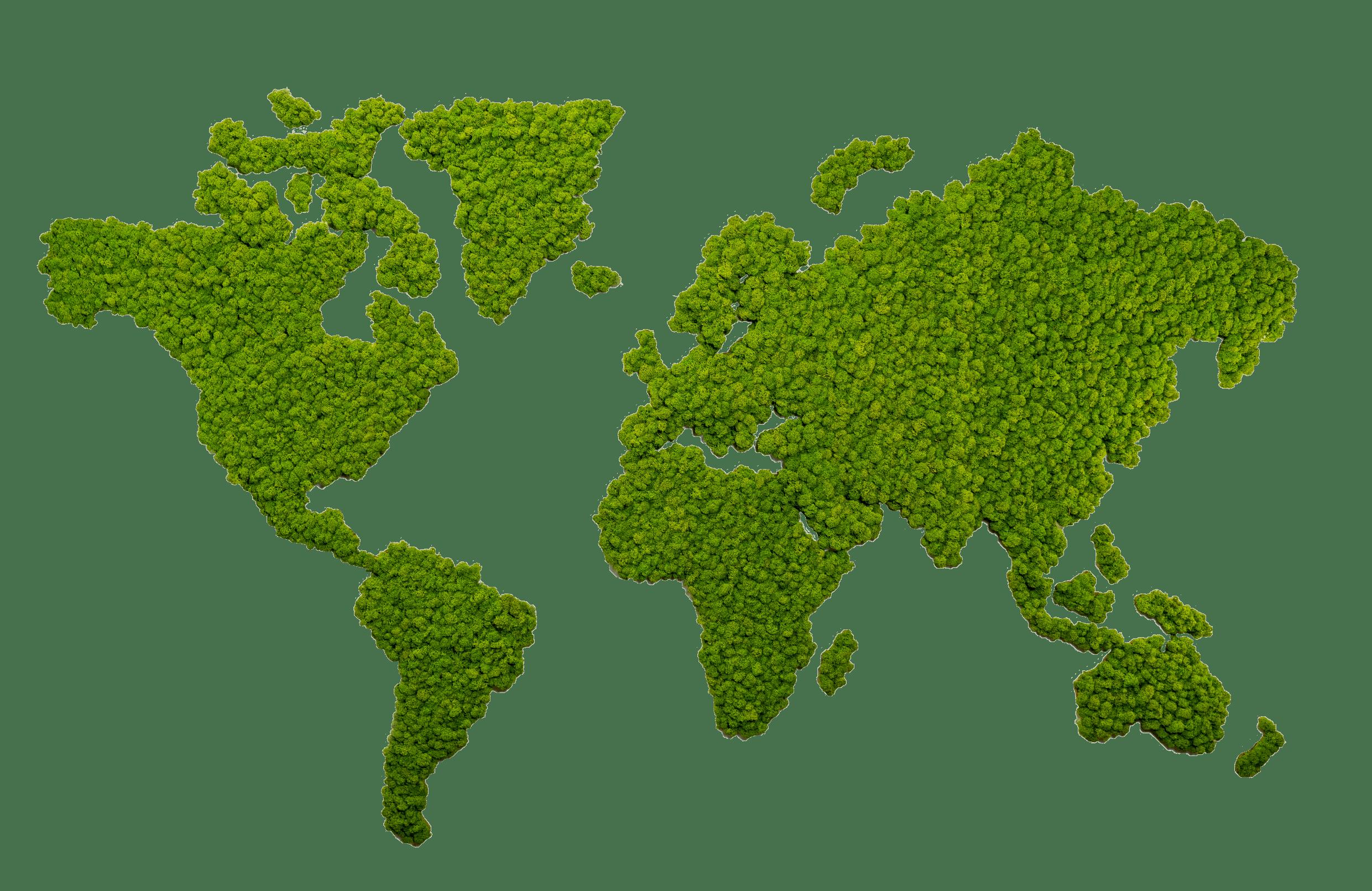 Finestgreen Moosbilder Flachmoos Ballenmoos Grüne Wände