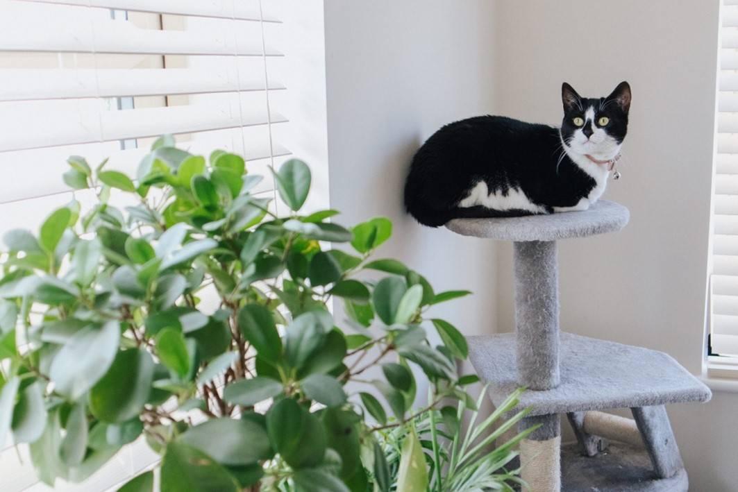 cat tree or cat condo