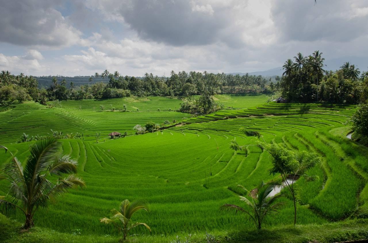 BeanBear Indonesia