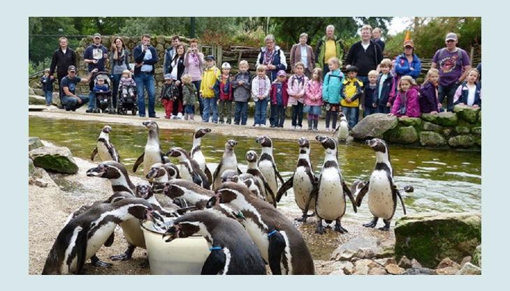 naturzoo rheine pinguin fütterung