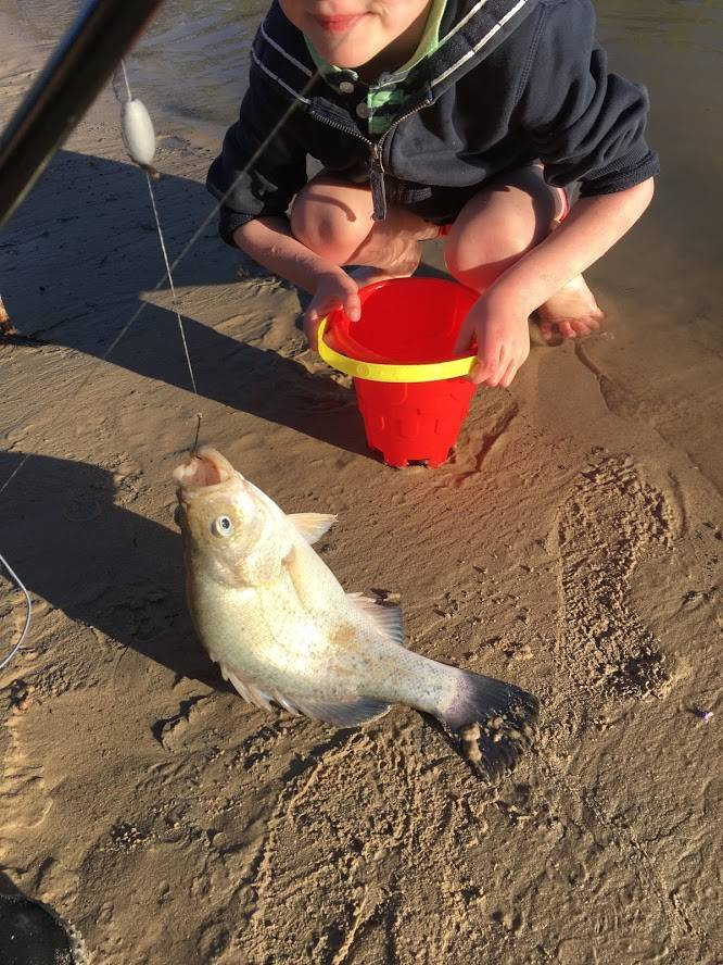 Catching fishing yellow belly golden perch in Murray River
