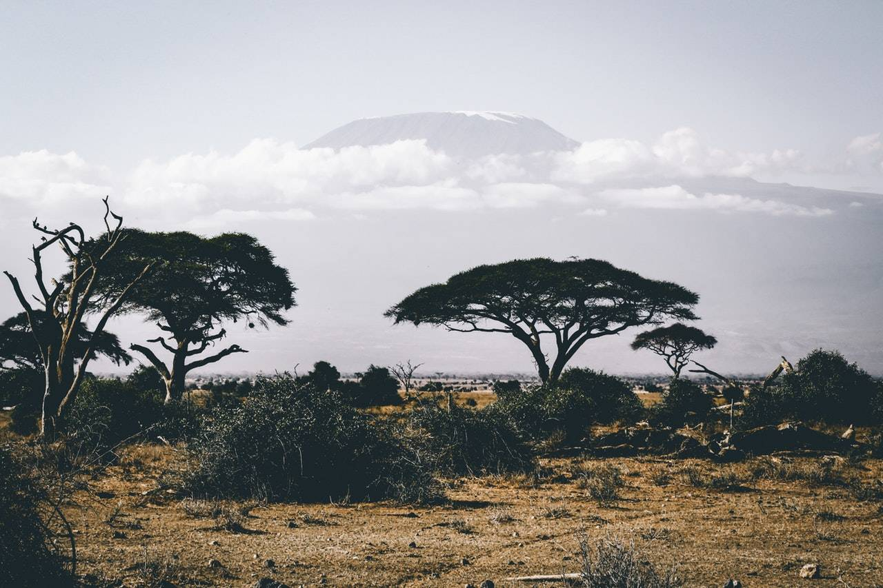 BeanBear African plains