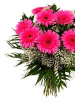 HF Admiration Flowers