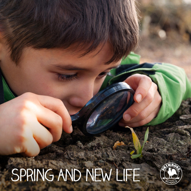 Young Primrose student looks at a leaf sprouting from the ground through a magnifying glass