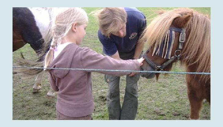 bauernhof gut halfeshof a pony streicheln