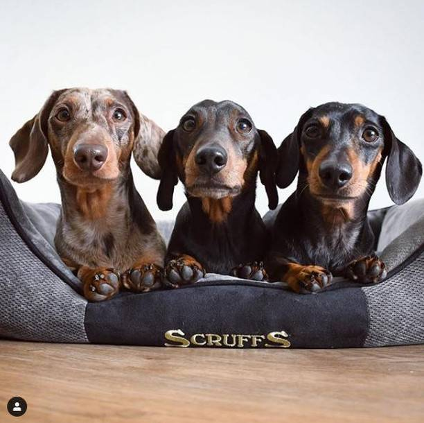 Thermal Dog Beds