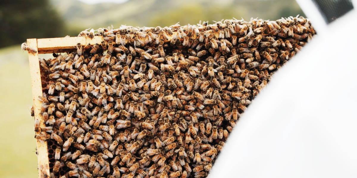 Manuka South World Bee Day