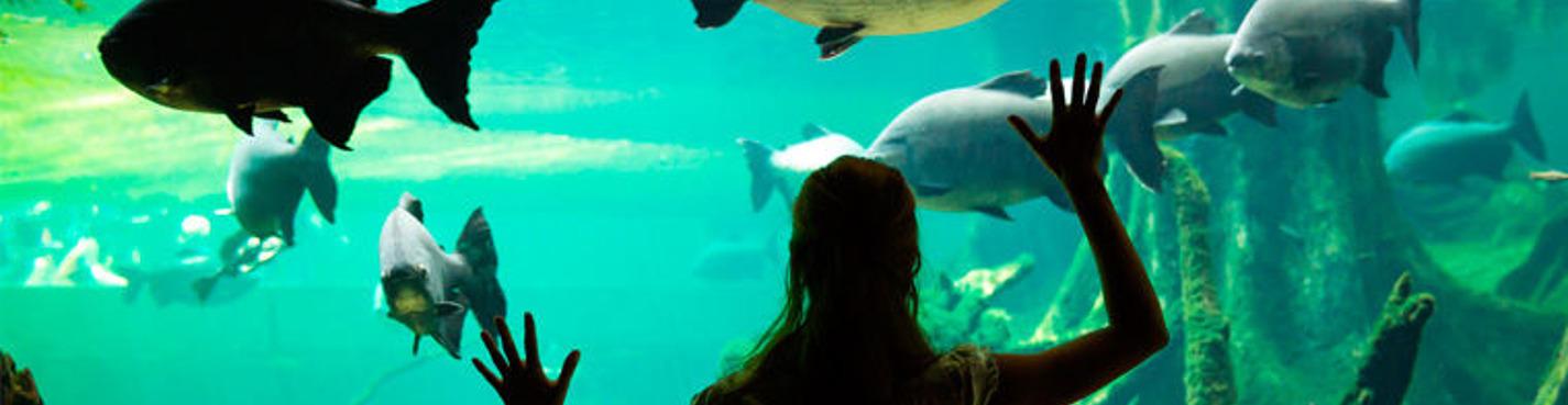 Фотосессия в океанариуме