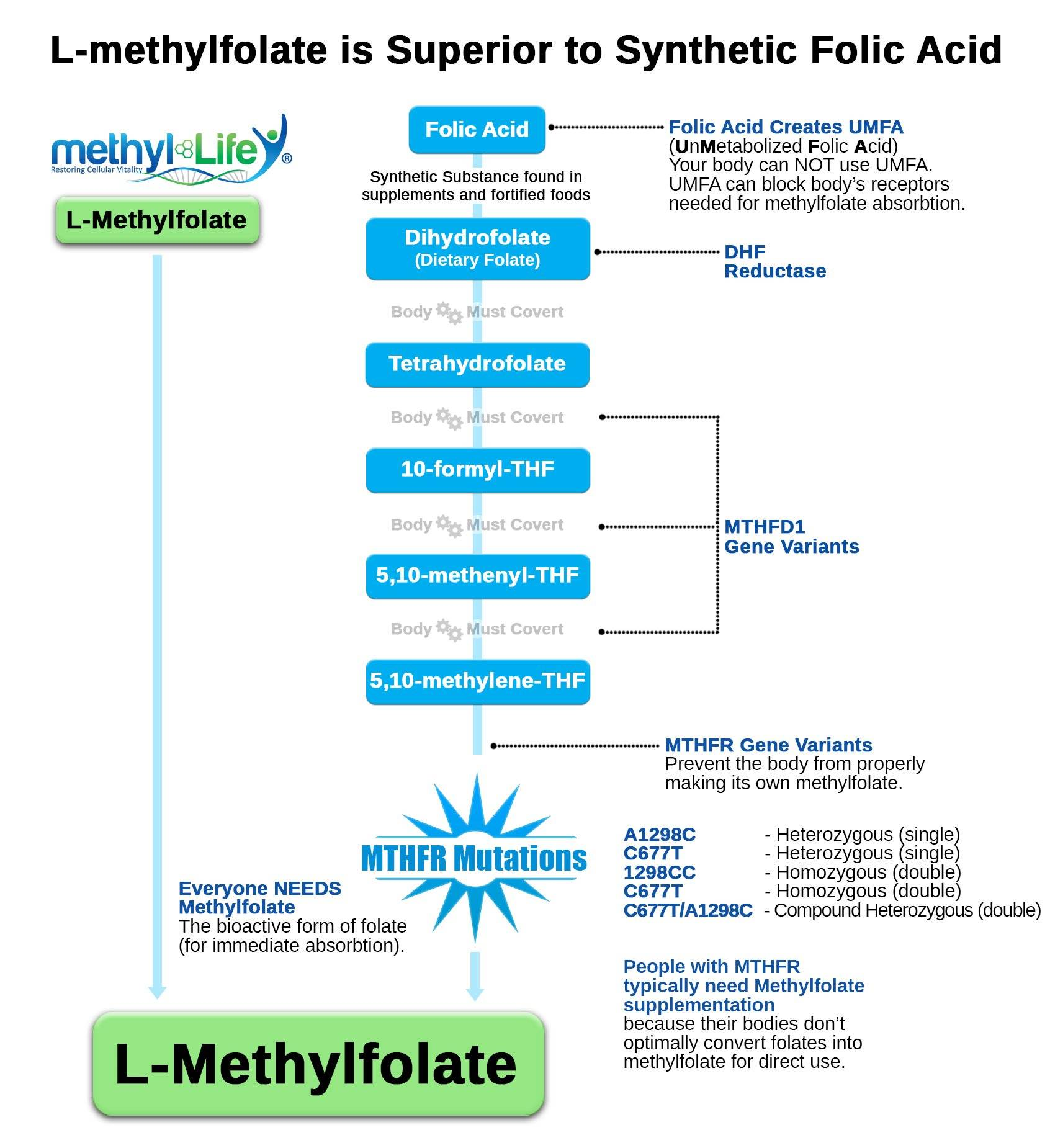What does Methylfolate Do Chart?