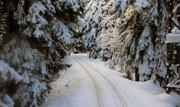 Бакуриани — Боржоми — горнолыжный курорт