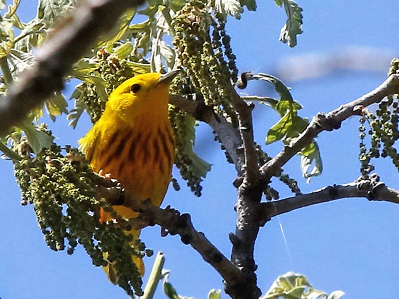 Birding Challenge
