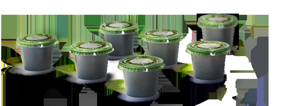 Wheatgrass Juice in cups