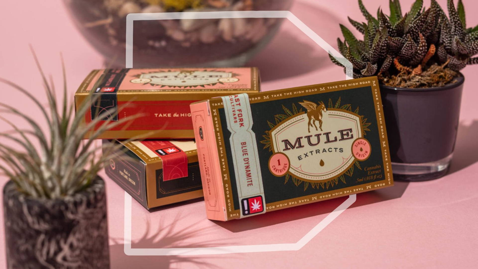 Pack of the Month: Mule Extracts Wants To Be The Workhorse