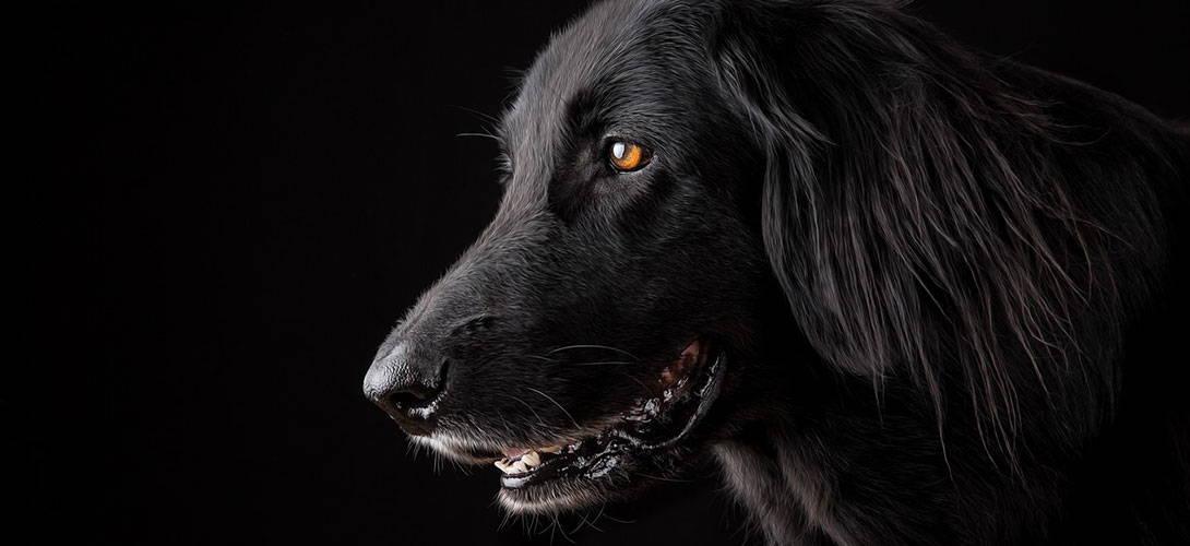 Knochenkrebs beim Hund - Diagnose Osteosarkom - Titelbild