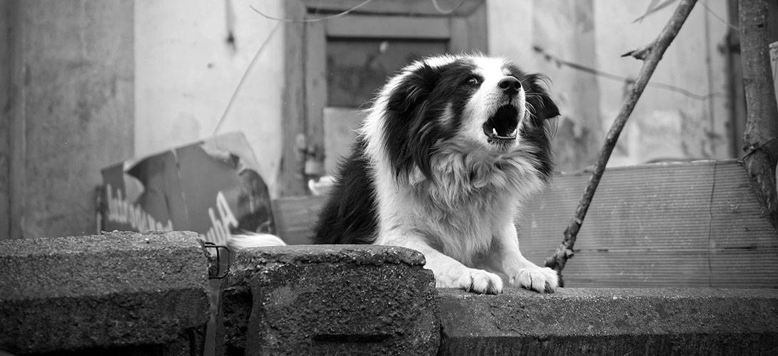 Tollwut beim Hund - Symptome, Stadien und Ansteckungsgefahr