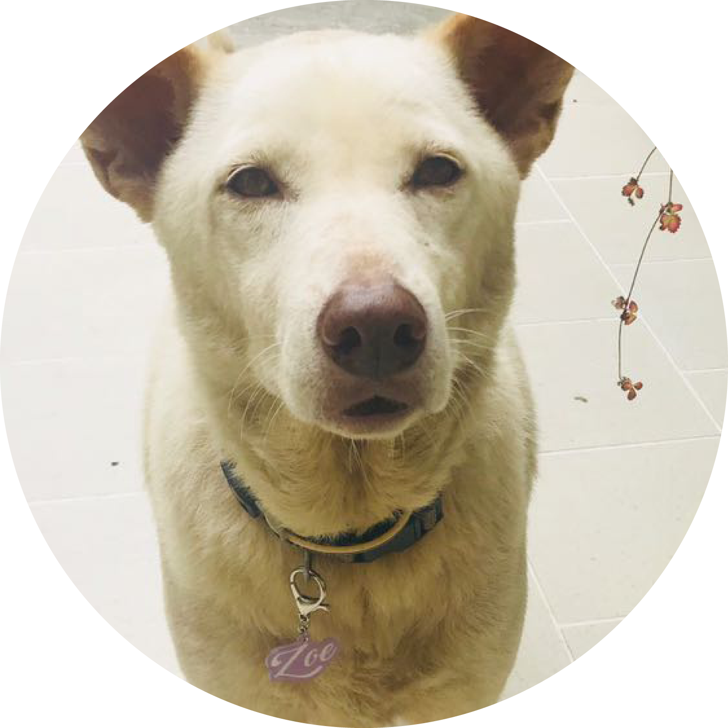 Bashtags® by Blank Sheet Pet ID Tags