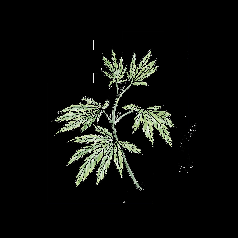 Hemp. Cannabinoid. CBD. Extract. Tincture. Medicine. Herbs.