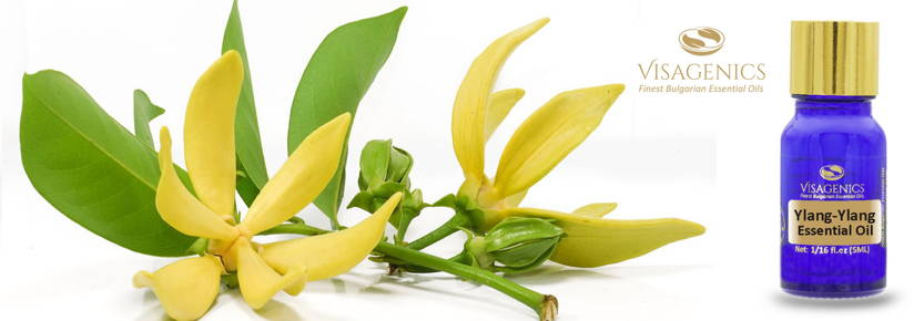 Ylang Ylang Essential Oil Visagenics | Product Description