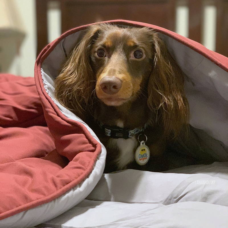 Sleep zone bedding website store home page instagram social media puppy dog laying on bed