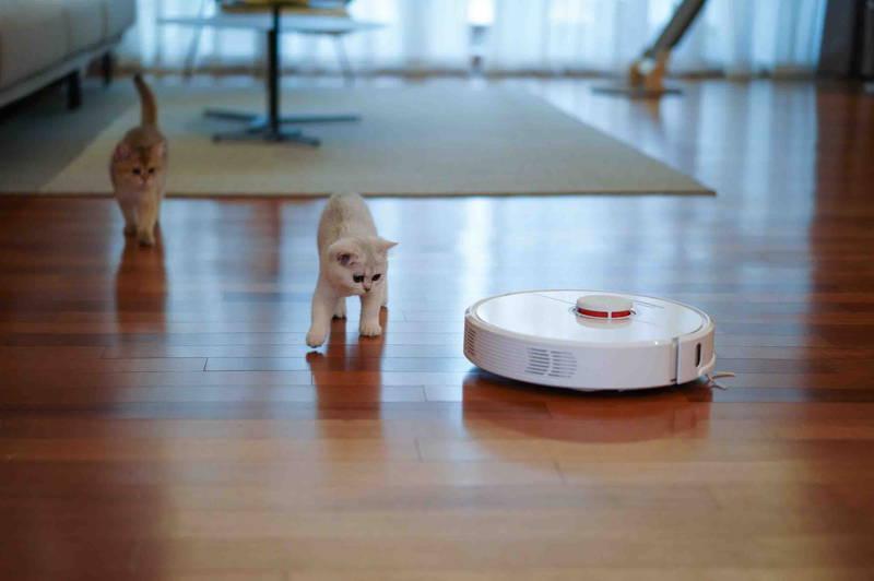 photo de chats dans le salon avec un aspirateur