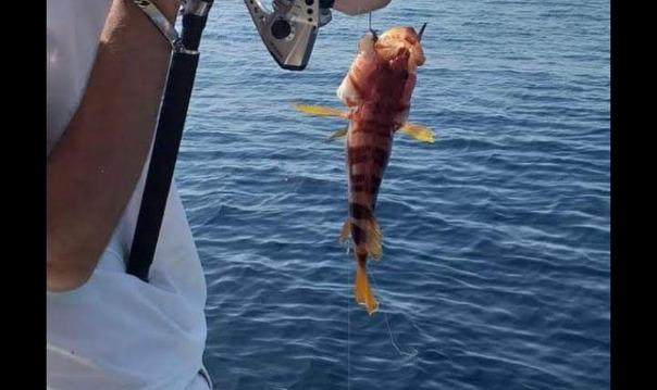 Рыбалка и купание в бухтах