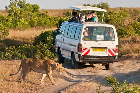 Nairobi National Park Safari Tour (Open Roof Van)