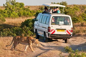 Nairobi National Park Safari Tour (Open Roof Van)