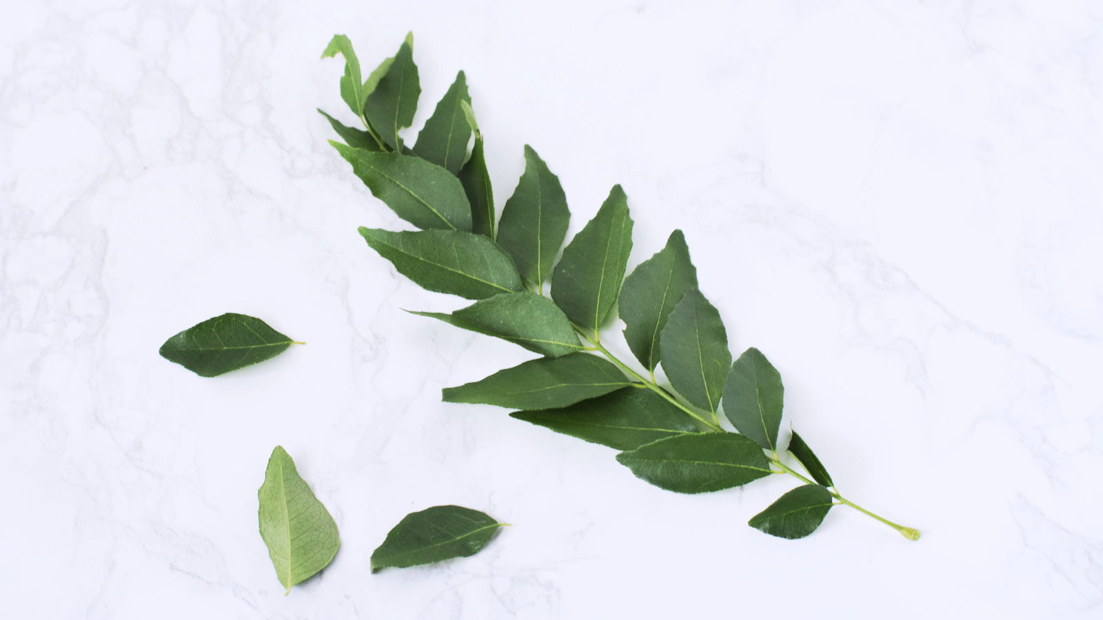 Curry Leaves Stalk(s)