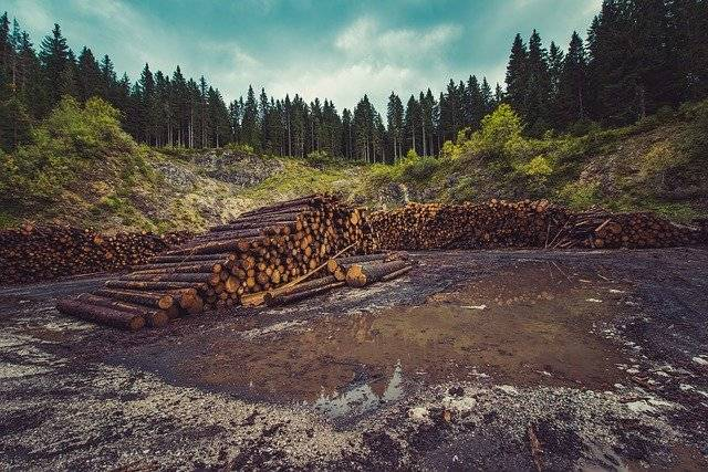 forest that has been cut due to massive deforestation