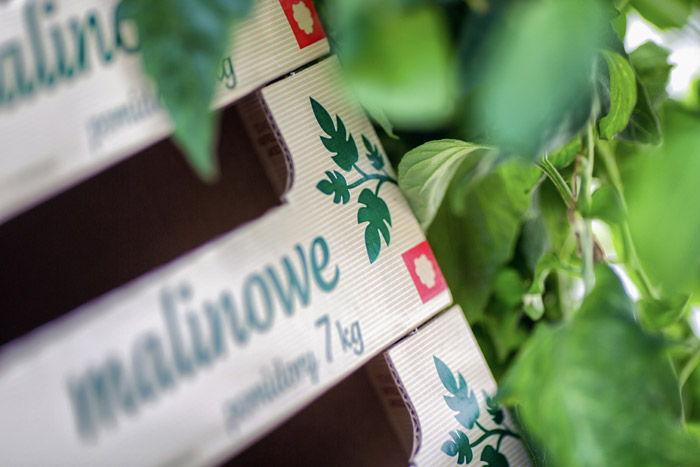 08 Ostaszewska Olszewska Konarska Minasowicz Legajny Tomato Farm Packaging RED DOT
