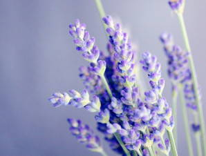 Bulgarian Essential Oils Producer and Supplier - Bulk