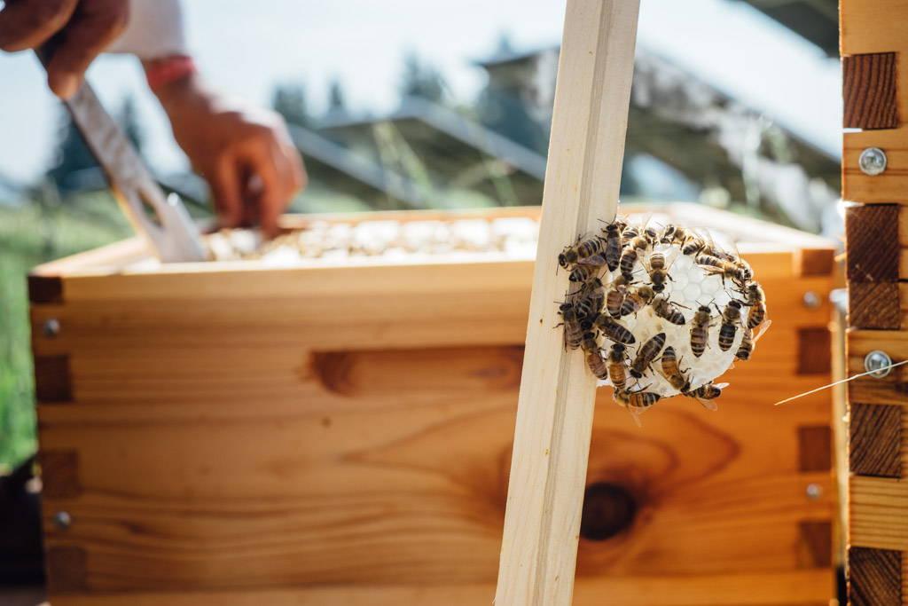 honeybees near a langstroth hive
