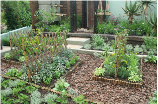 Cape Town - waterwise garden ideas