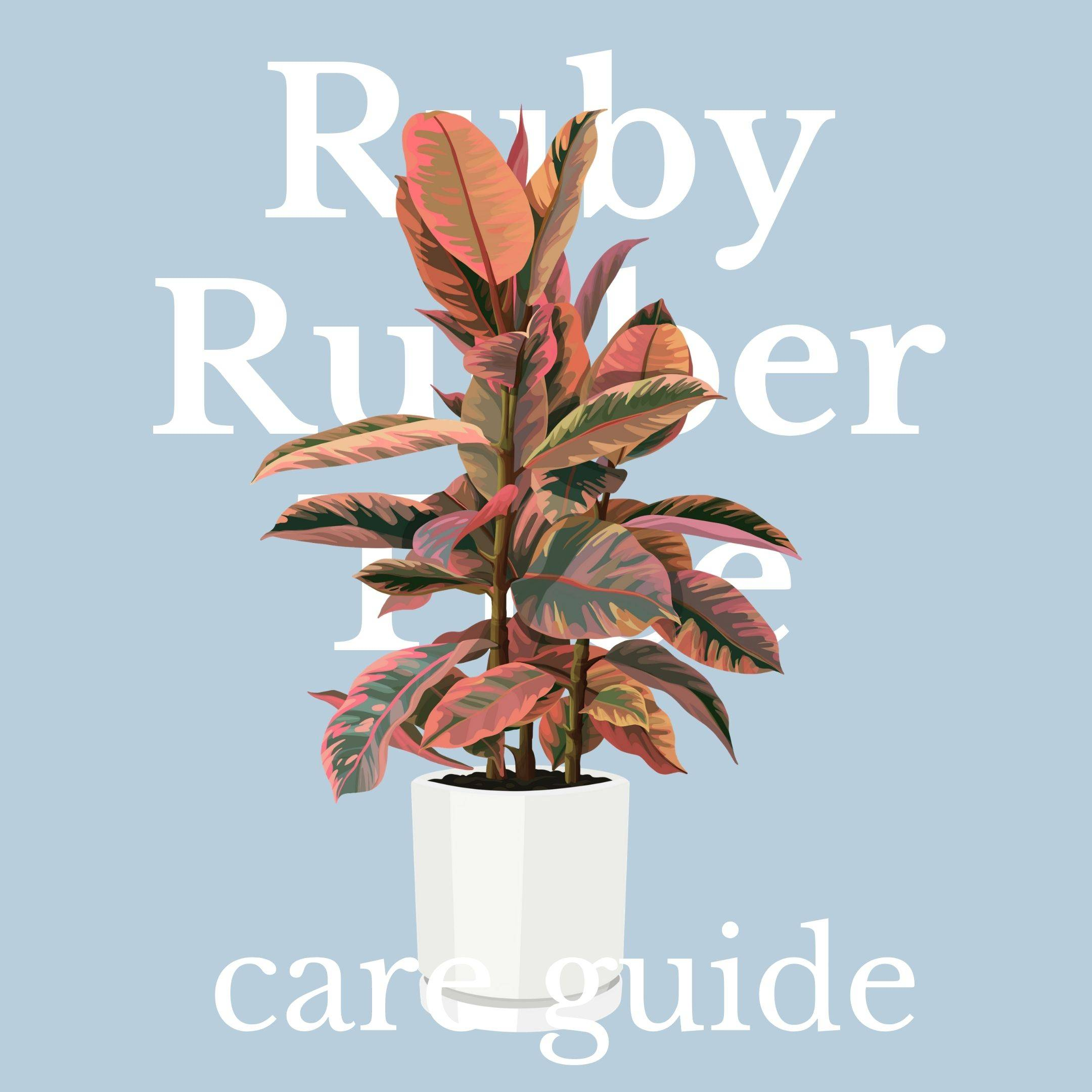 Drawing of the ruby rubber tree