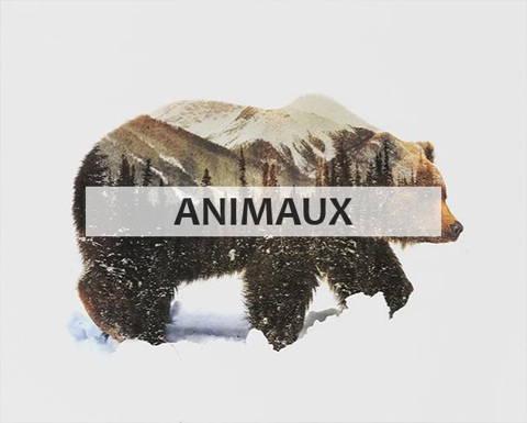 Peinture par numéros collection animaux