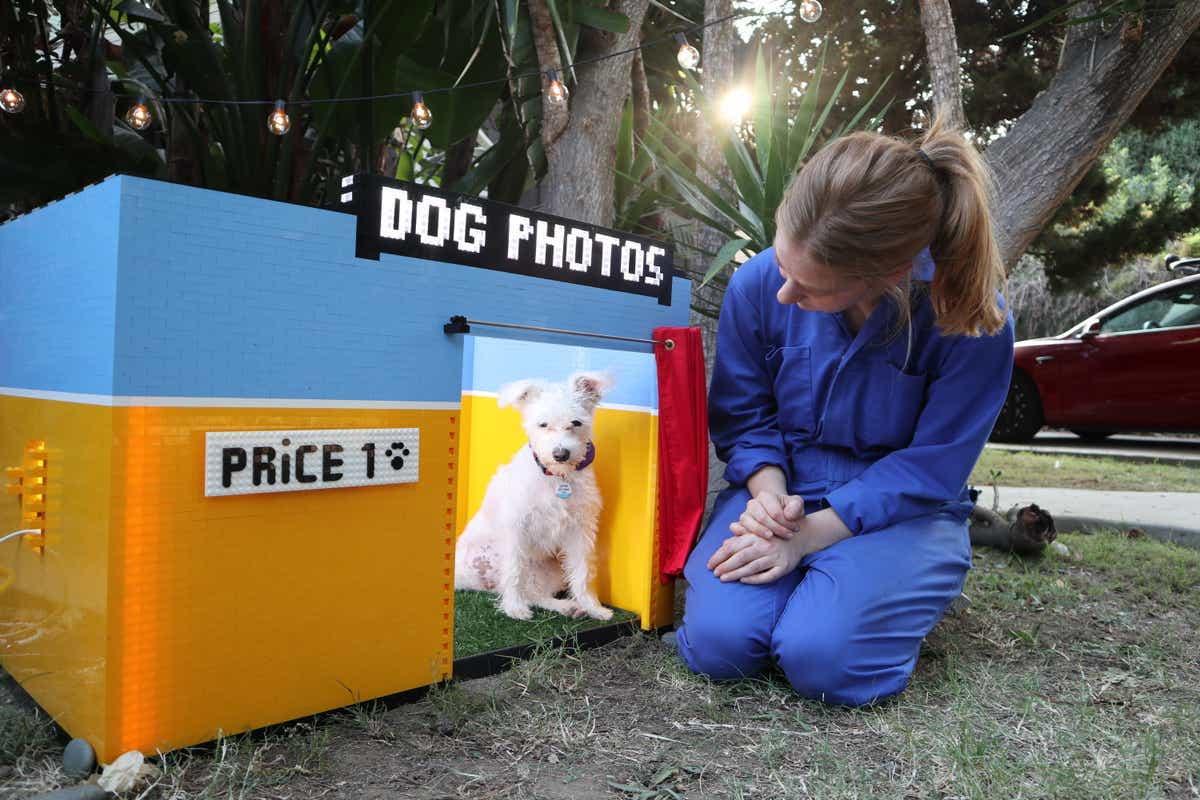 dog photo thumbnail