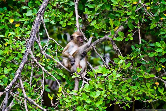 Индивидуальная экскурсия в Канжо (база Вам Сат)