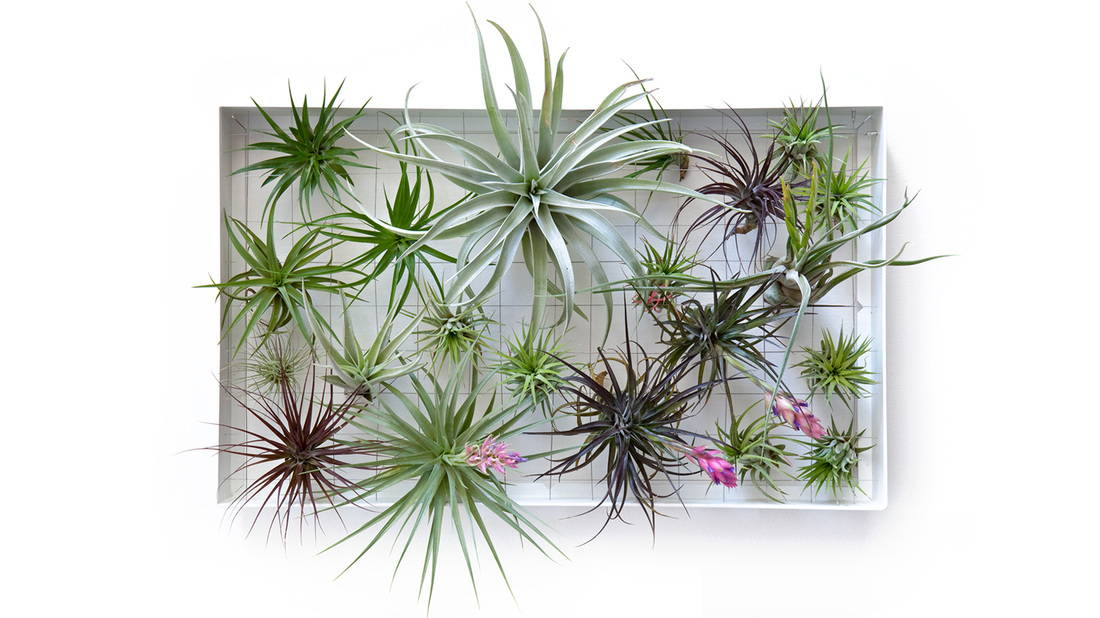airplant display airplantman frame