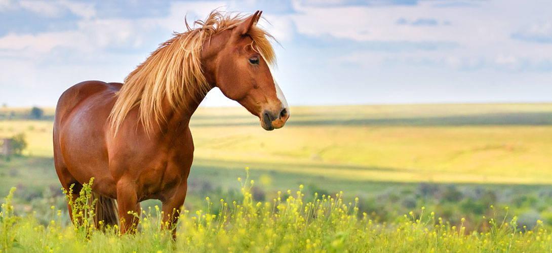 Würmer beim Pferd - Titelbild