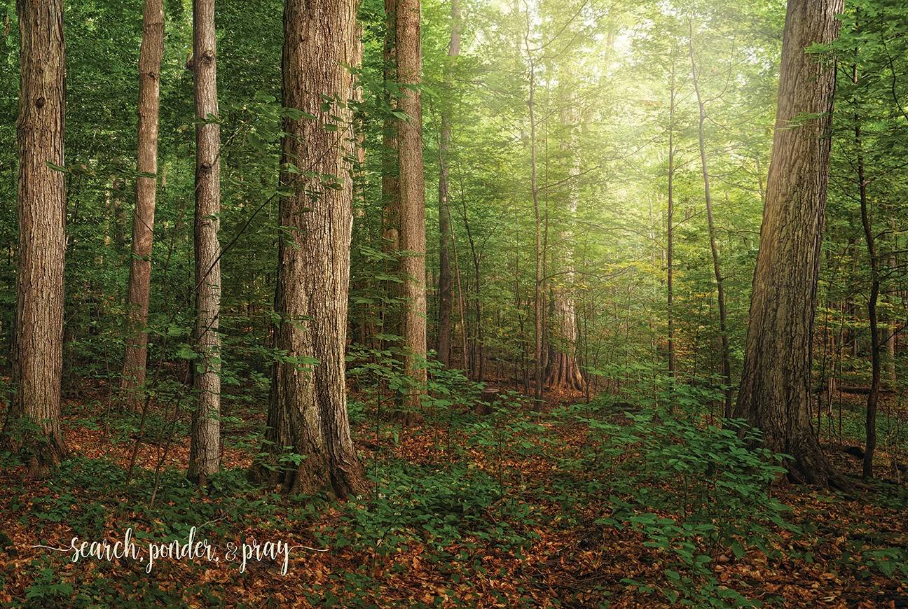 LDS art poster of the Sacred Grove. Text reads: Search, ponder, and pray.