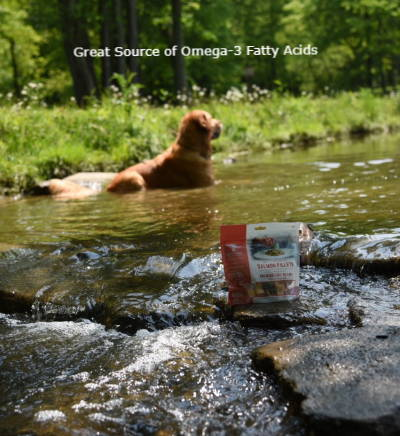 Kodi Bear swimming. Pet Chef Appetizer Bites Salmon Fillets Dog Treats. Omega-3 fatty acids, benefits of salmon oil for dogs.