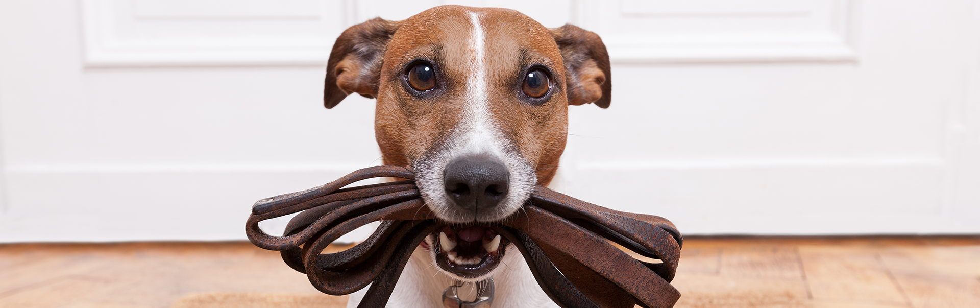 Pet Surgery Veterinarian Academy Animal Hospital Greenwood Indianapolis Indiana