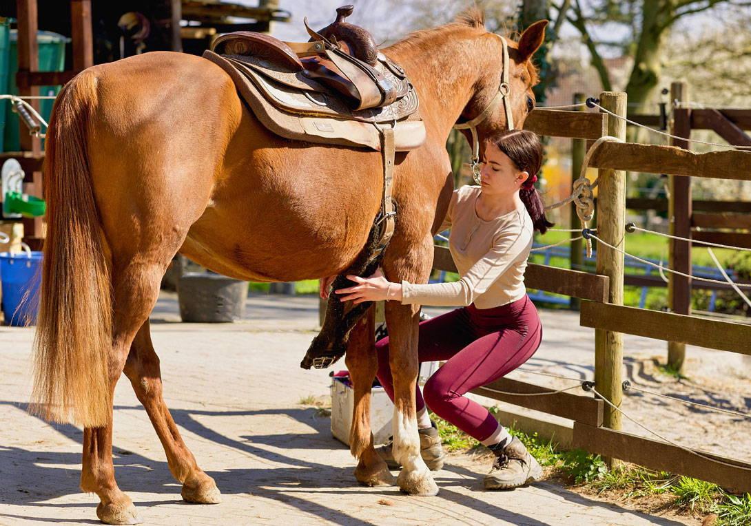 Das Pferd satteln
