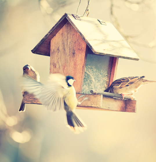 Trento - Spruce up your #garden this spring with colourful bird nesting boxes.
